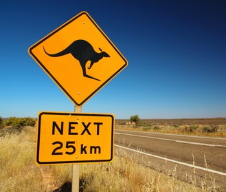 Kangaroos on the road
